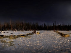 eagle-dog-yard-yukon-quest-2011-small-pan